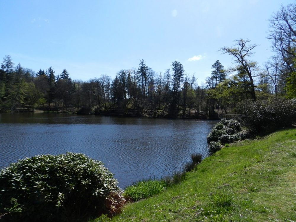 L'étang du château de Nieul